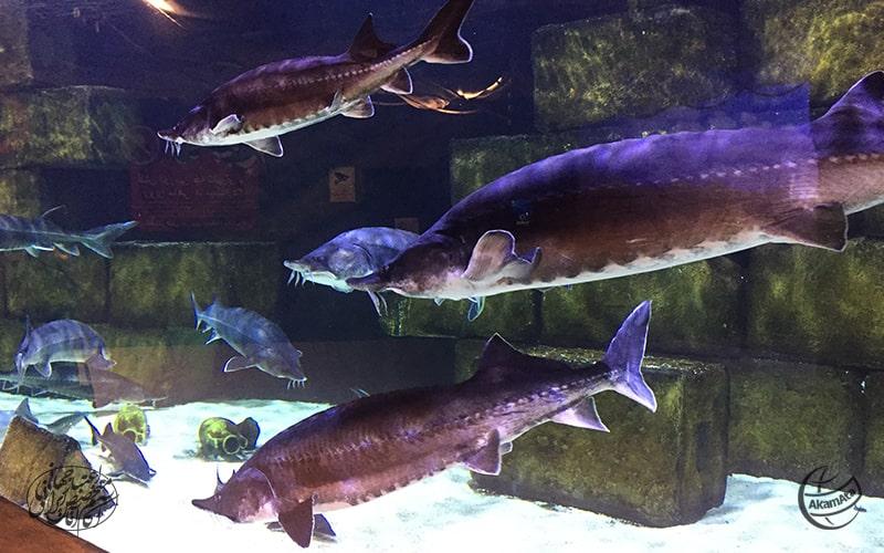 Funtastic Aquarium - Anzali Free Zoneآدرس آکواریوم منطقه آزاد انزلی