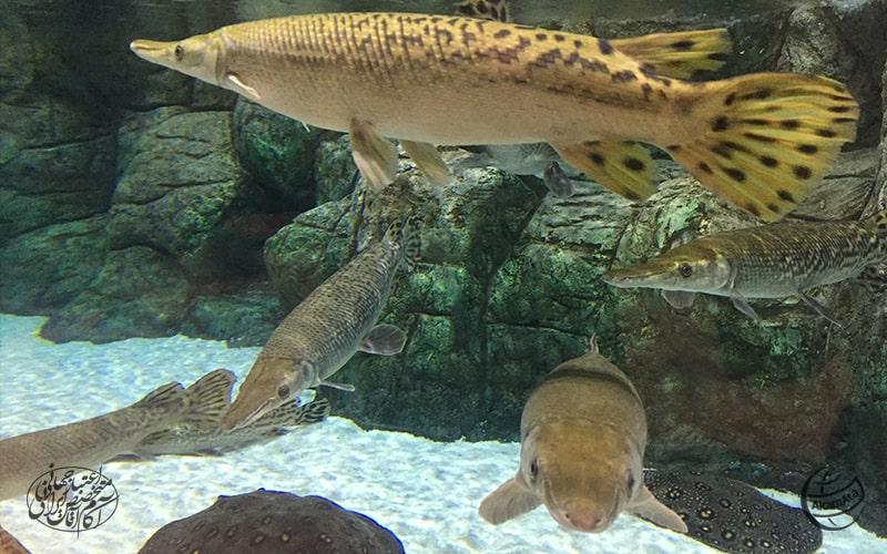 جاهای دیدنی منطقه آزاد انزلیFuntastic Aquarium - Anzali Free Zone