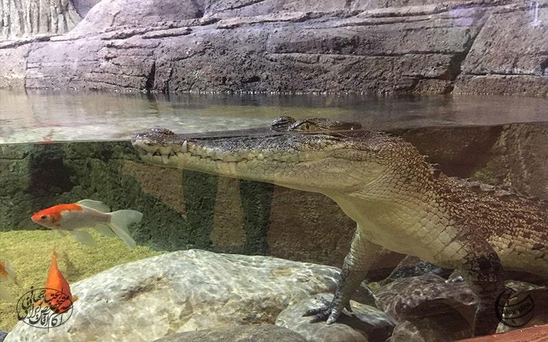 جاهای دیدنی منطقه آزاد انزلی Funtastic Aquarium - Anzali Free Zone