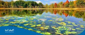 تابستان کجا برویم؟ سفر به شمال مسافرت گیلان بندر انزلی تالاب مرداب تصویر زیبا عکس